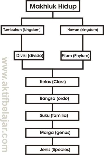 Pengertian Klasifikasi Makhluk Hidup (Sistem Klasifikasi Carrolus Linnaeus)