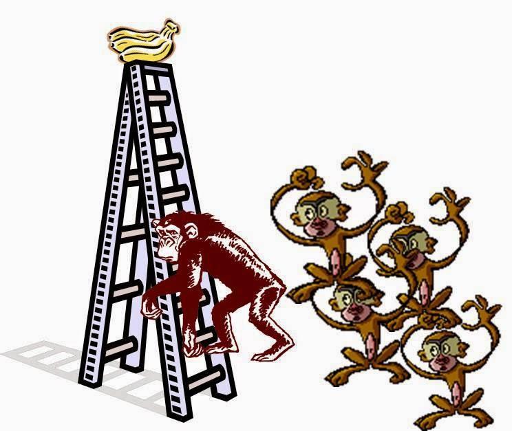 experimento de los 5 monos