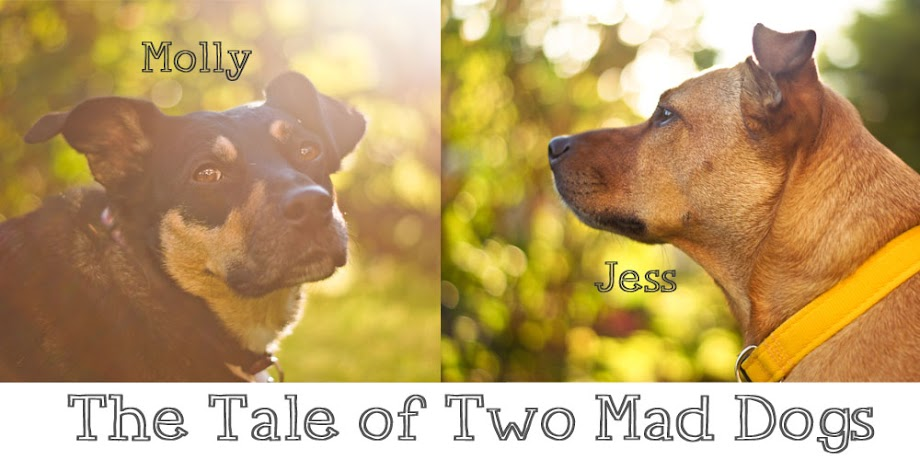The tale of two mad dogs