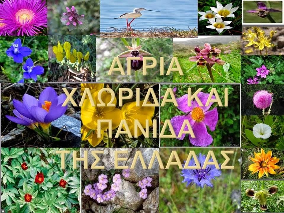 http://users.sch.gr/vaskitsios/katsba/dim/e/geo-oikosysthma.htm