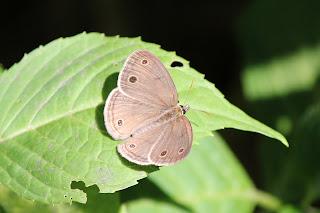Butterflies: Flying Flowers