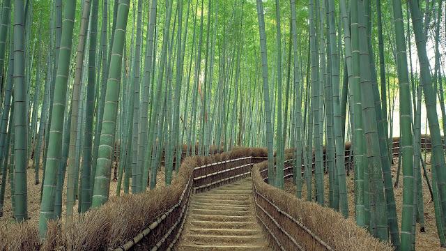 Sagano (Kyoto)