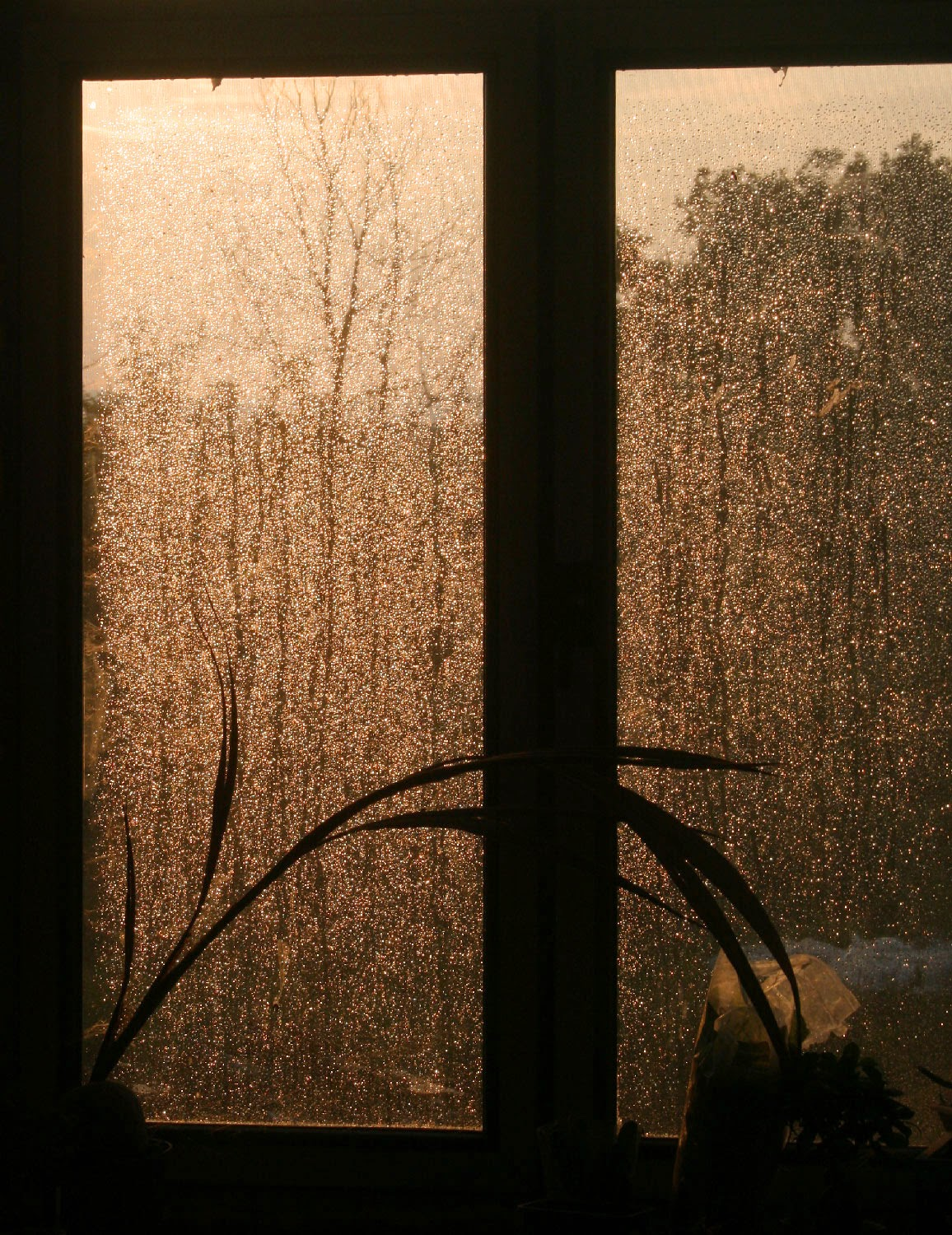 Sun through a rainy window