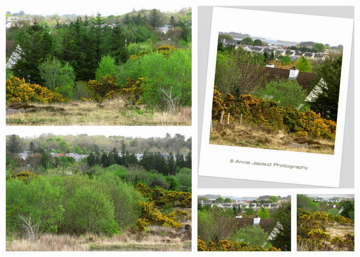 spring postcard from Oughterard