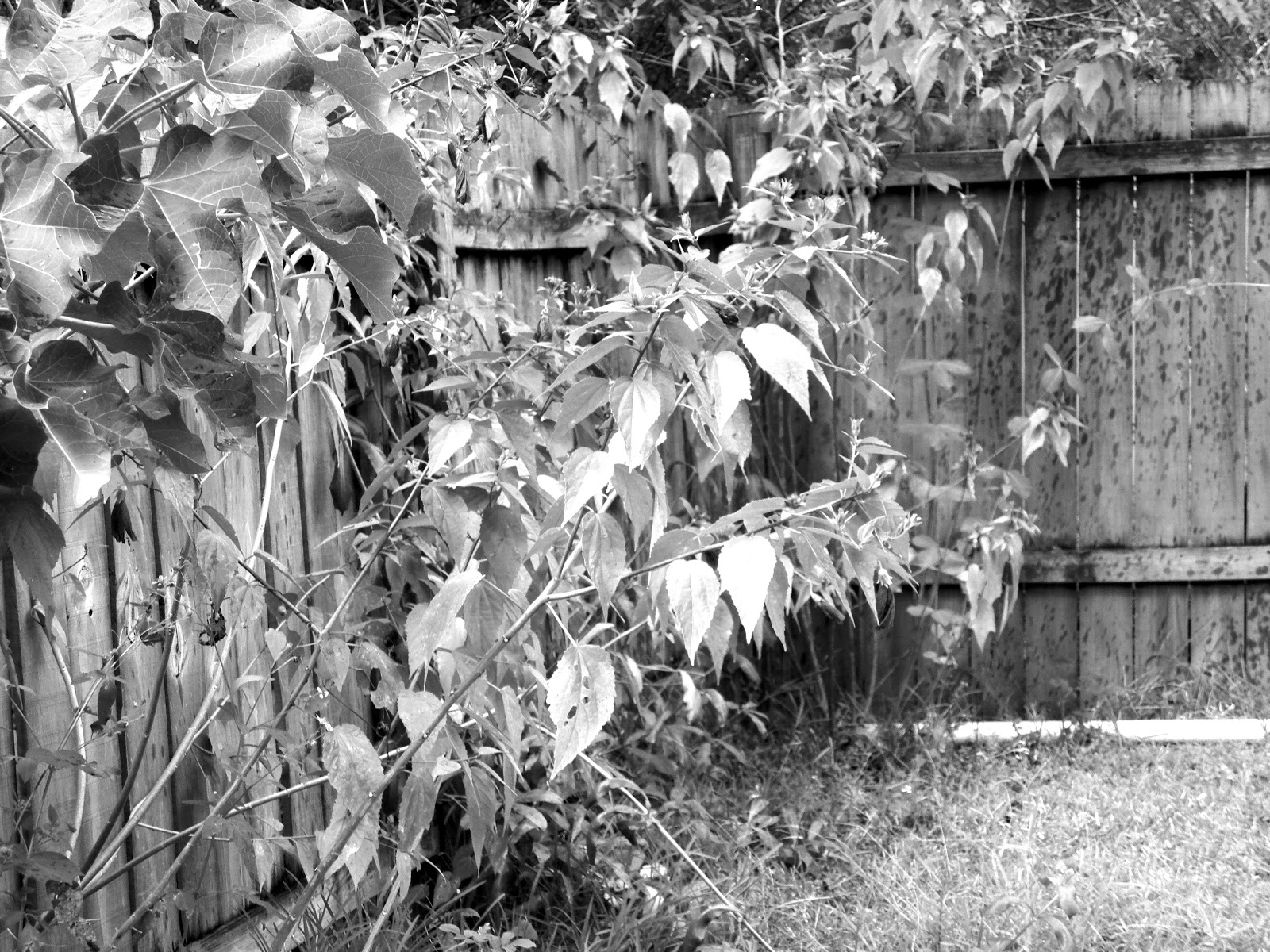 Practice taking some photographs for conversion to black and white when youve finished use photo editing software to convert the images from color to