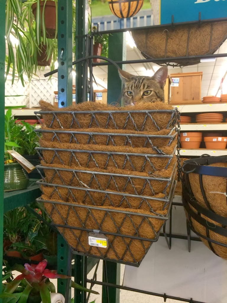 Funny cats - part 92 (40 pics + 10 gifs), cat in the store