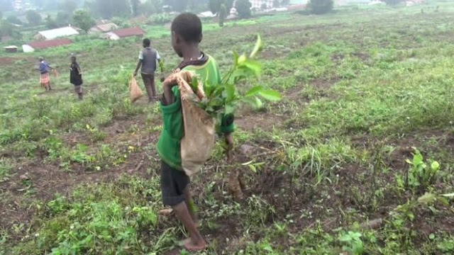 BBC: niños de 10 años trabajando en terrenos de la Iglesia Católica en Uganda