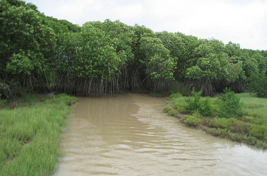 Bhitarkanika Wetland - Kendrapara
