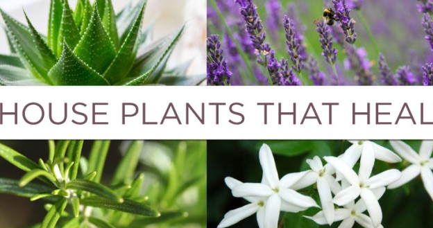 plants that heal and cure deceases
