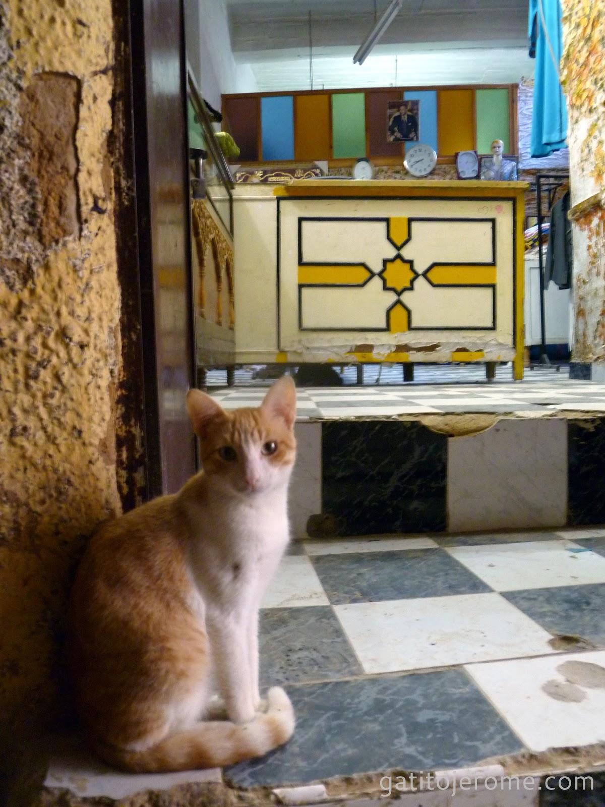 Gato sentado en el escalón de una casa en la ciudad de Fez.