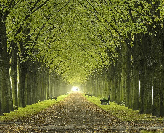 The Road Lined With Trees Enjoywithluh