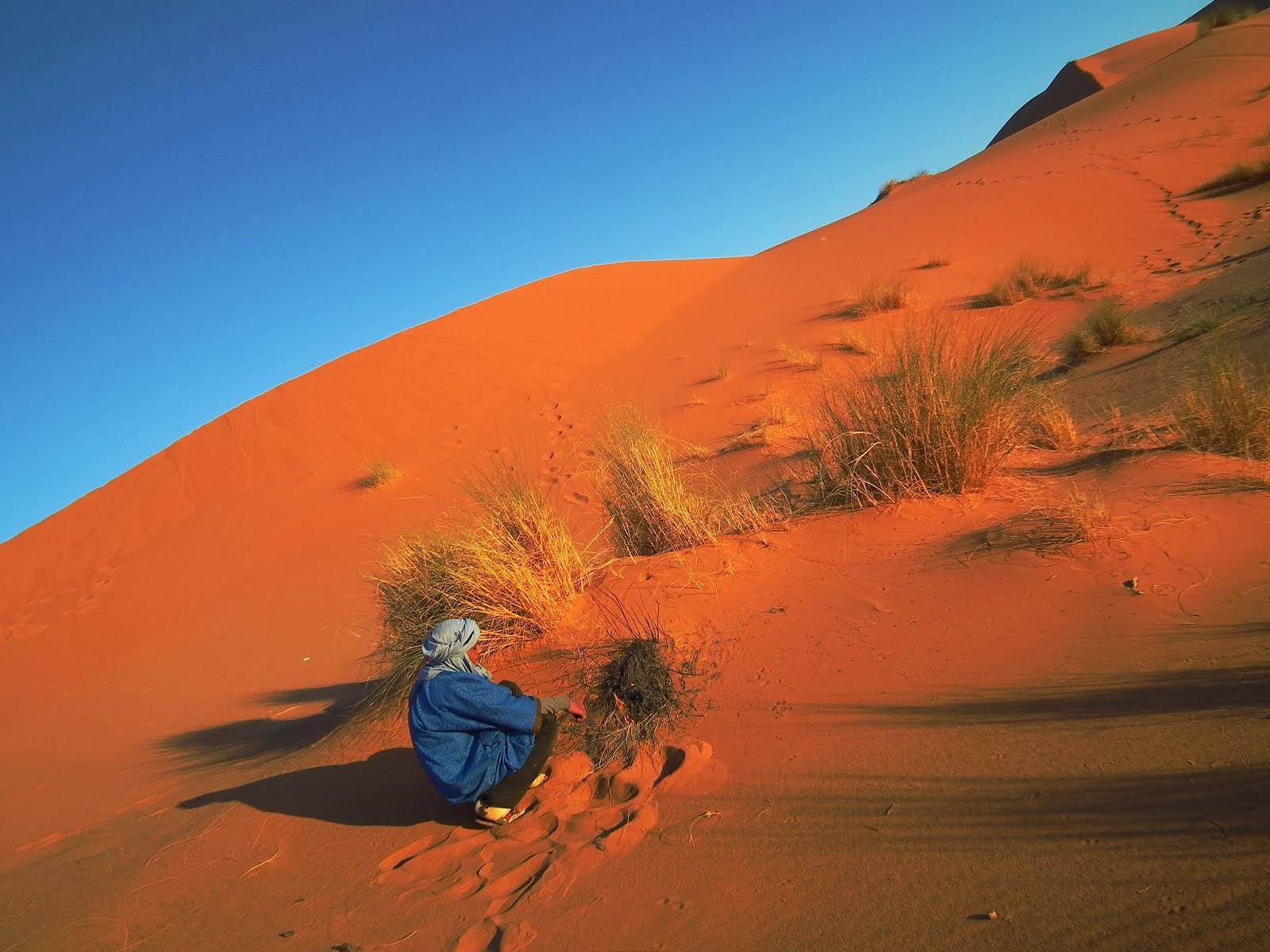 適任的沙漠夢想計畫(請按圖)