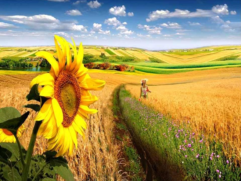 Imagini Cu Vara StolenIMG  HD Wallpapers