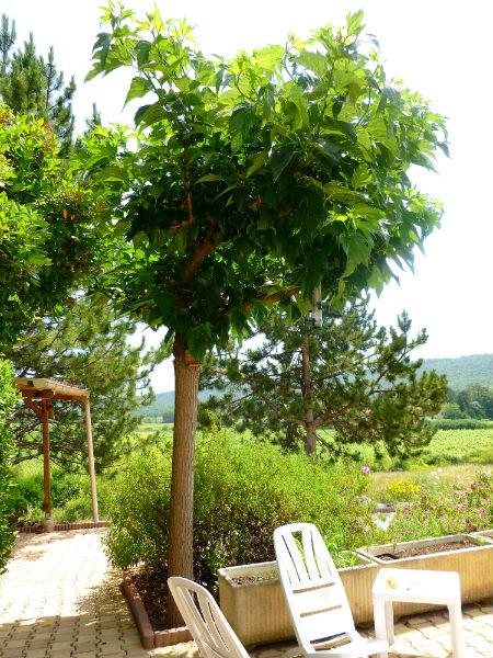 Le blog de sylvie m rier platane for Arbre artificiel pour terrasse