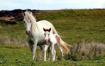 Caballo yegua mamá y su pequeña cría potro