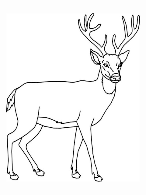 Free Printable Animal Deer Coloring Sheet Pictures Kids Deer Printable Coloring Pages