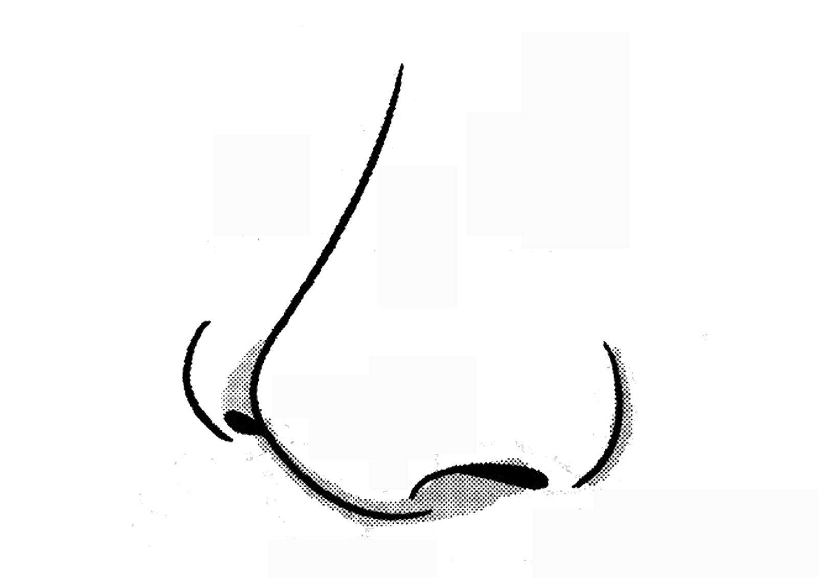 27 Gambar Mewarnai Hidung
