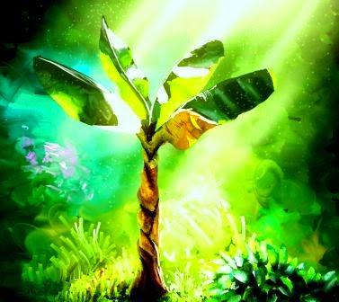 Pengertian Fotosintesis dan Proses Fotosintesis