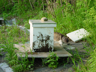 Honey bees on front of hive