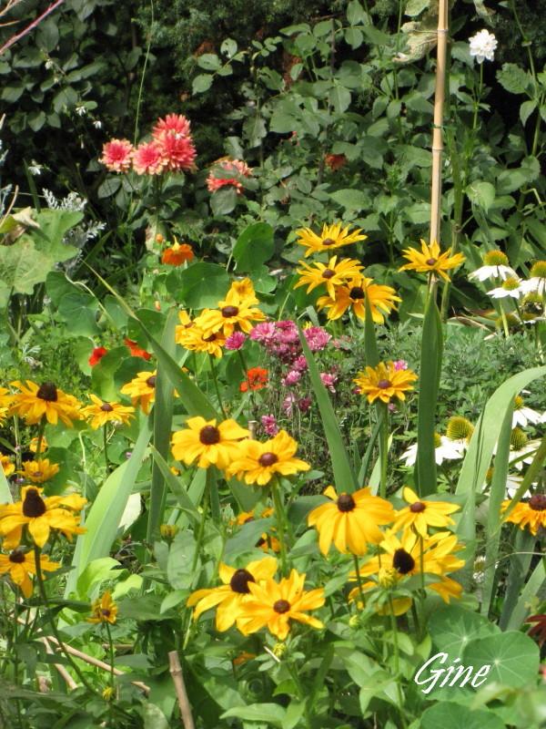 Au jardin de gine couleurs for Au jardin des couleurs