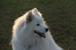 Pearlie (2 years)