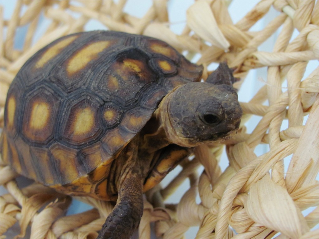 Types of Pet Turtles Turtles Turtles For Pets