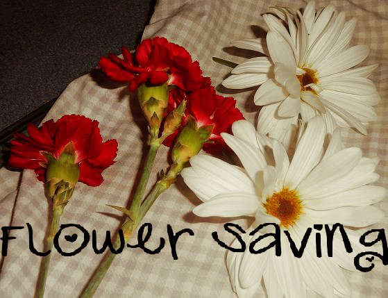 Owl love you diy saving flowers tips make sure you do not iron wax paper directly i placed a pillow case over top also be careful when pressing the flower with your hand mightylinksfo