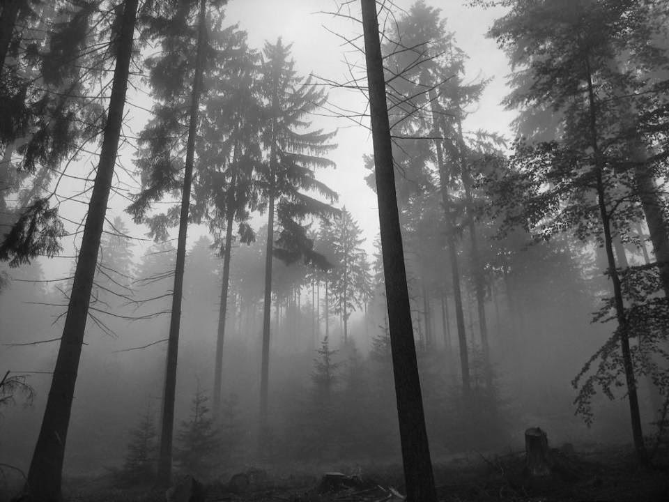 Enjoy Depressive Black Metal scene in this blog.