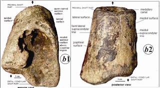 Hominin fossil, hominin fossil india, india fossil, narmada valley fossil, hominin in india
