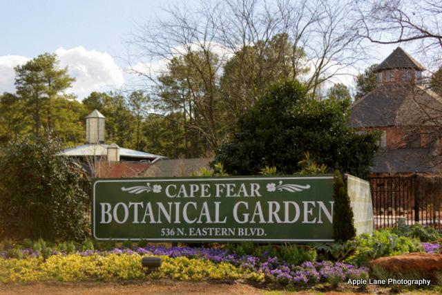On Carolina Wings Winter Walk Through Cape Fear Botanical Gardens