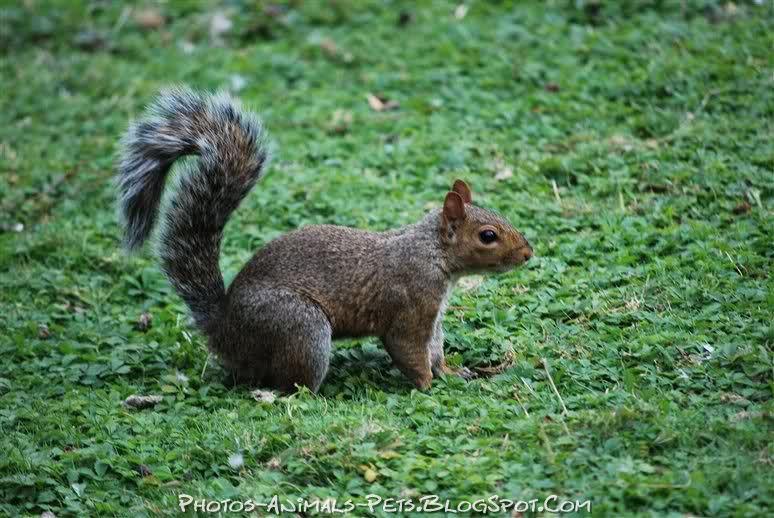 http://1.bp.blogspot.com/-6N663fRrfeM/Ttswm8AYJiI/AAAAAAAACVU/kLIq82dHF2g/s1600/squirrel%2Bpicture.jpg