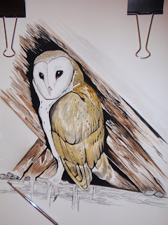 JOURNAL IN THE NATURE: Lechuzas comunes (Tyto alba) Diferentes Dibujos