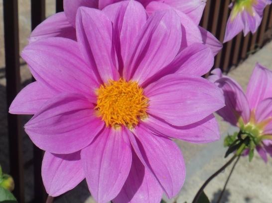 Beleza em Fotos - Passarinhos e Mais
