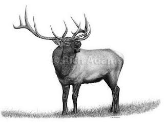 dibujos-animales-salvajes-lapiz