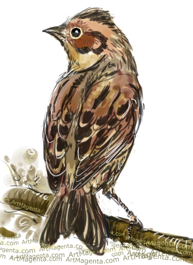 Little Bunting sketch painting. Bird art drawing by illustrator Artmagenta