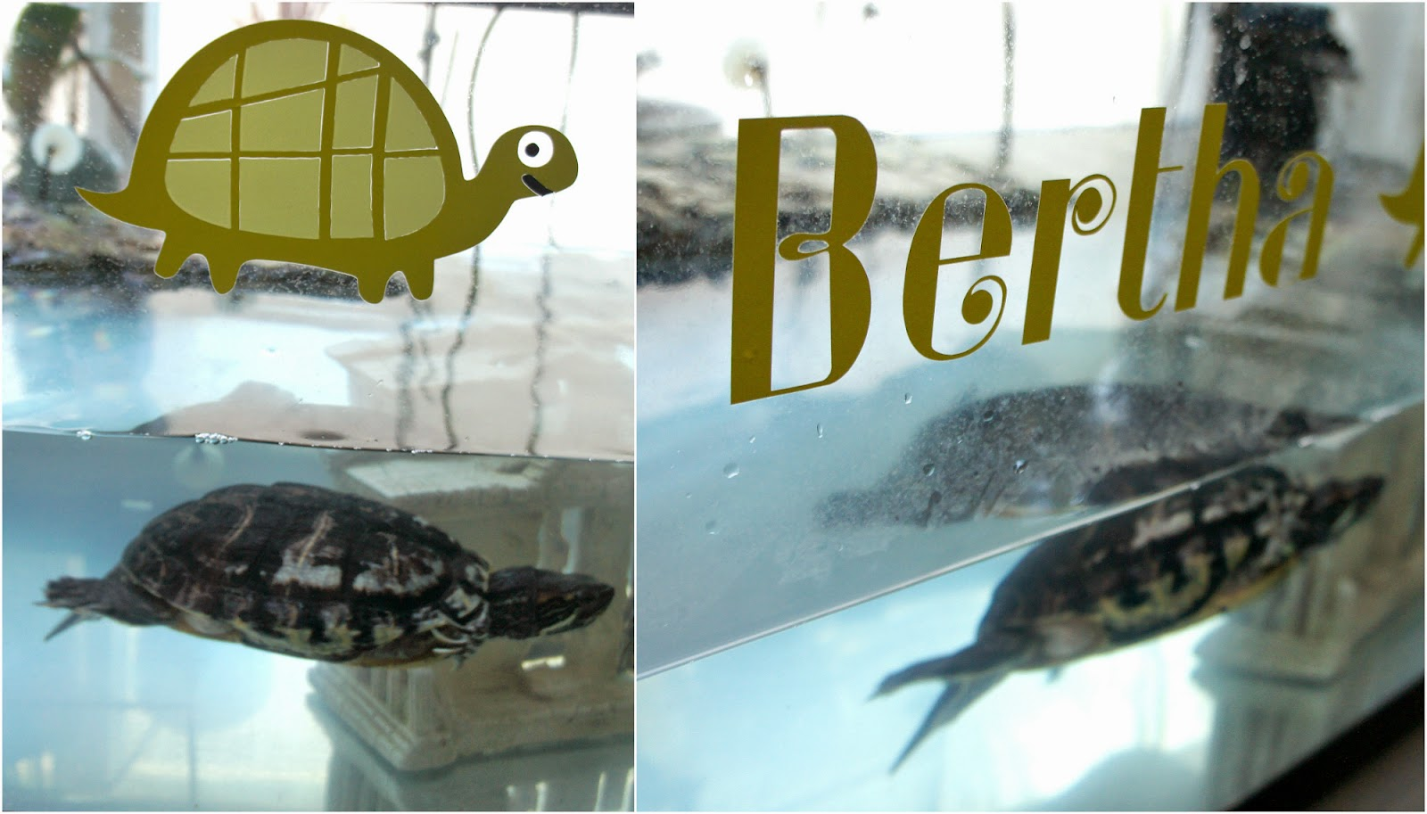 Custom Aquarium Decal on Diane's Vintage Zest!  #diy #craft #vinyl #pets