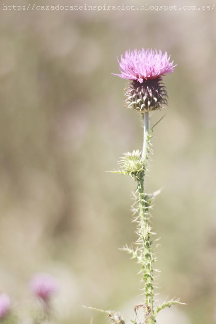 Cazadora de inspiración © Anna Tykhonova,El Parc Natural del Garraf,mountain,photography,nature,Mediterranean