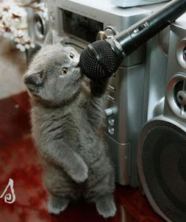 binatang nyanyi