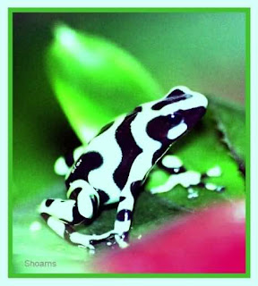 frog skin color animal wallpaper clipart anatomy frogfish