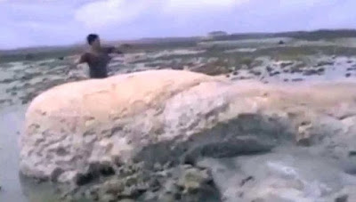 Δείτε το μυστηριώδες απόκοσμο πλάσμα που ξεβράστηκε μετά το τσουνάμι της Ιαπωνίας