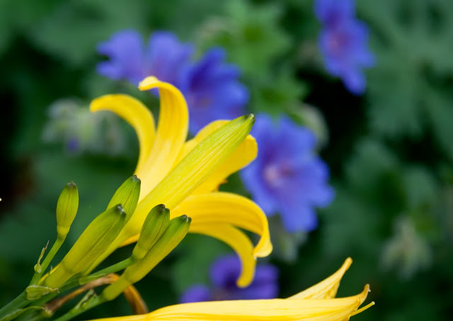 colour wheel in garden design blue yellow