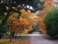 Bienvenidos a este blog y al otoño de Madrid