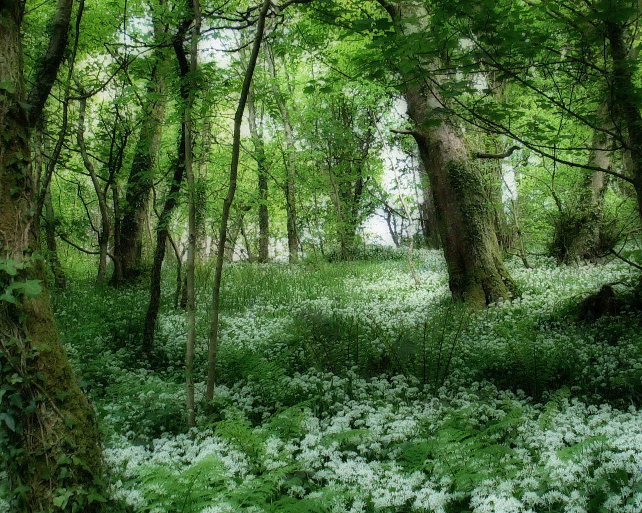 http://1.bp.blogspot.com/-6P3Rc37W6_Q/T77IJYAmU0I/AAAAAAAAE10/tZ0kiL95iyg/s1600/Green-Forest-Wallpaper-green-20036573-1280-1024.jpg