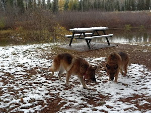 Leben and Erde in snow Oct 6th, en route to Pukaskwa NP