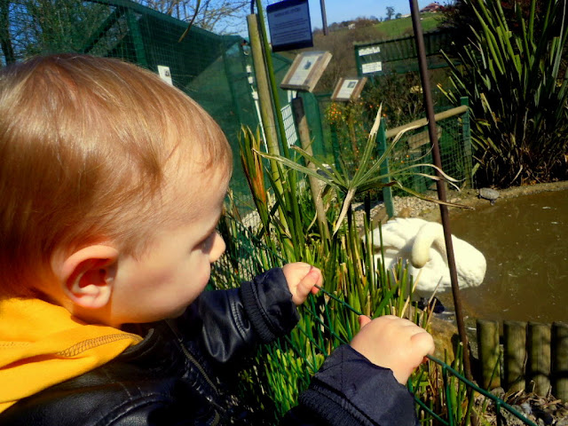 Asturias con niños. a dónde vamos hoy? Núcleo Zoológico El Bosque, en Oviedo