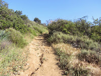 Toyon Trail climbs to meet the junction with North Trail adjacent to the Toyon landfill, Griffith Park