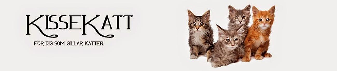 Kissekatt Kattblogg