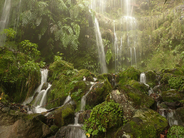 http://1.bp.blogspot.com/-6PTpL06kVPQ/TyRxirSR7jI/AAAAAAAAOpw/gxWNbQXIqW8/s1600/floresta+cascatas.jpg