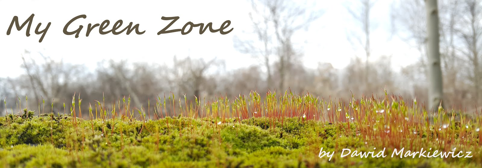 My Green Zone - Bonsai Blog by Dawid Markiewicz