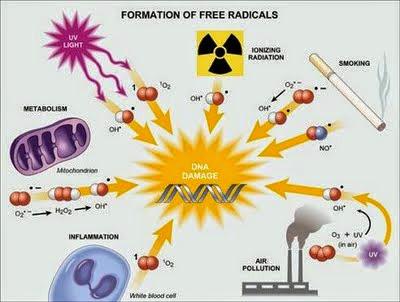 Radicais livres. Sabe o que são